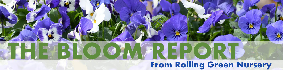 RGN Bloom Report