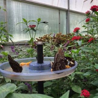 Butterfly House, Put-in-Bay Ohio